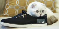 Как вывести запах кошачьей мочи с обуви